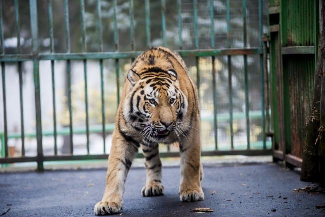 зоопарк дебрецен