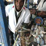 рибний ринок ессувейра