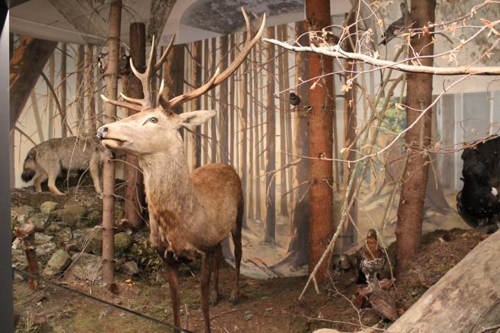 Музей охорони природи Ліптовскі Мікулаш