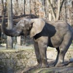 слон зоопарк ніредьгаза