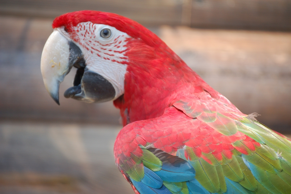 папуга зоопарк ніредьгаза