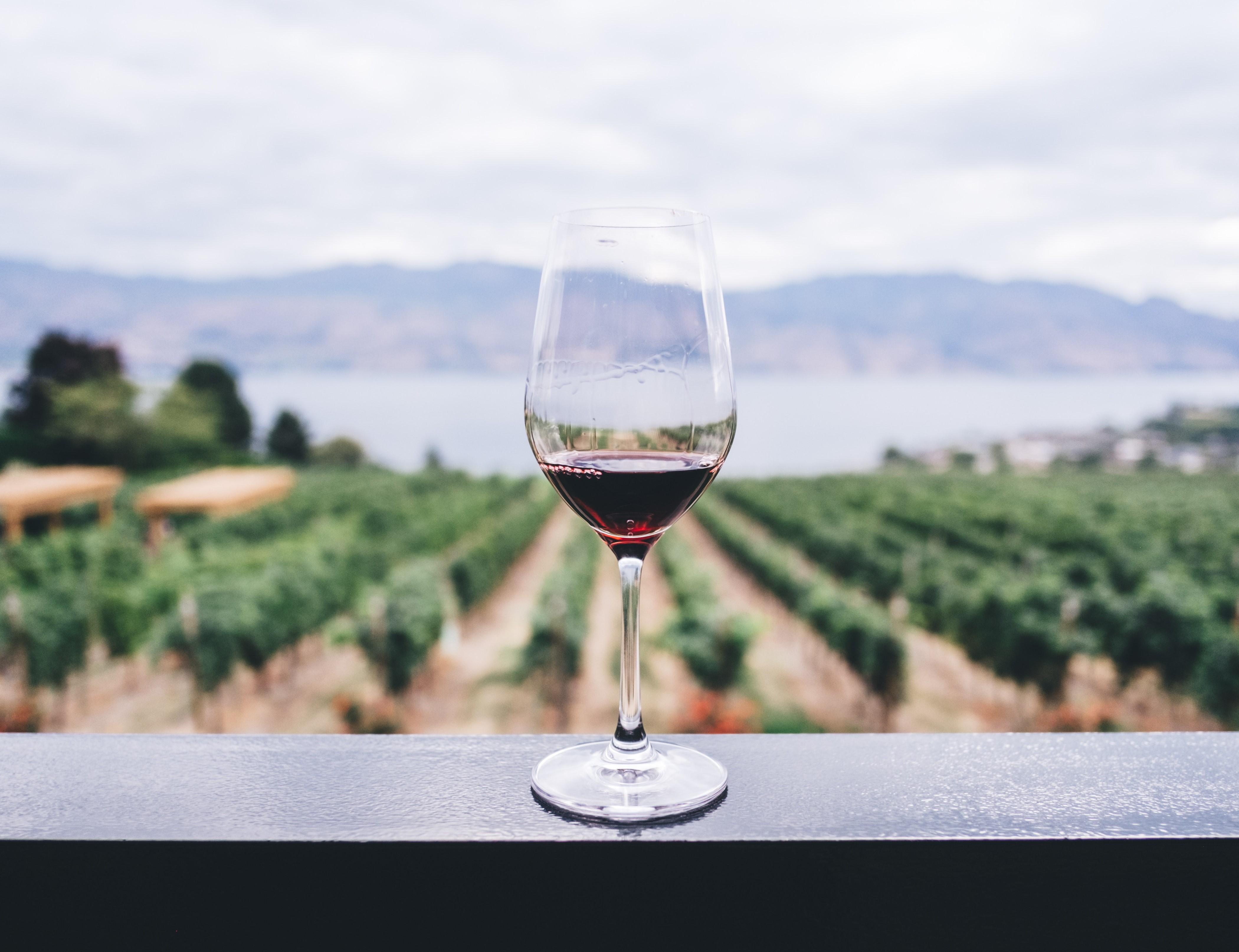 вино регіони угорщини