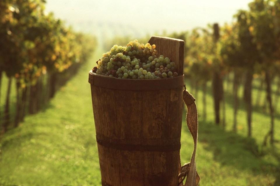 токай вино
