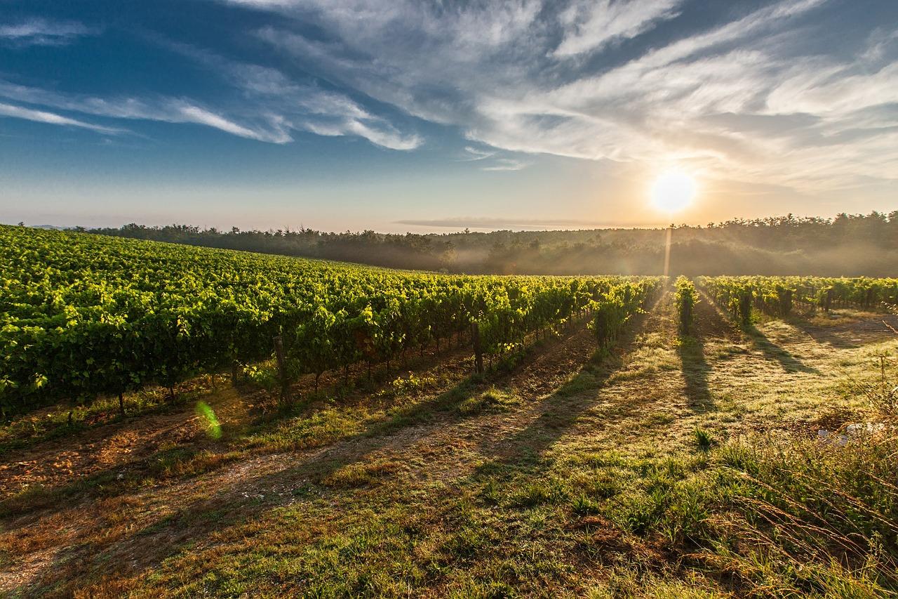 вина Словаччини сорти