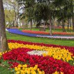 парк тюльпанів