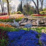 парк тюльпанів стамбул