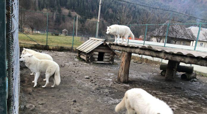 долина вовків